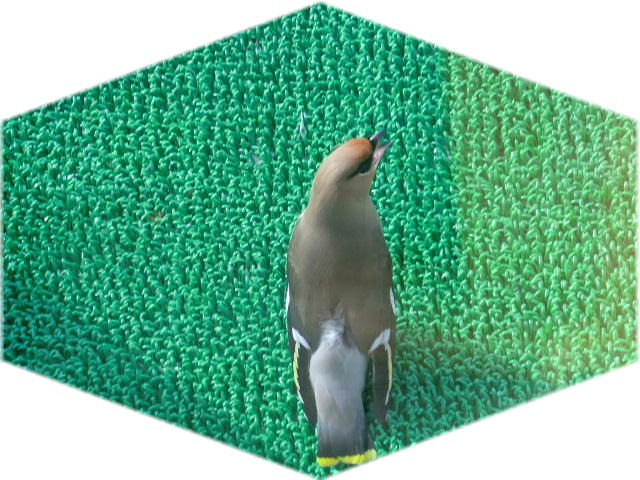 ファイル 2300-2.jpg