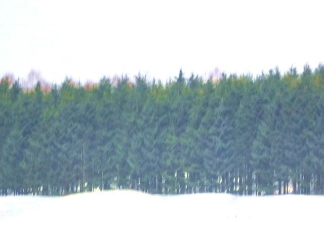 ファイル 2403-4.jpg