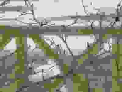 ファイル 2412-1.jpg