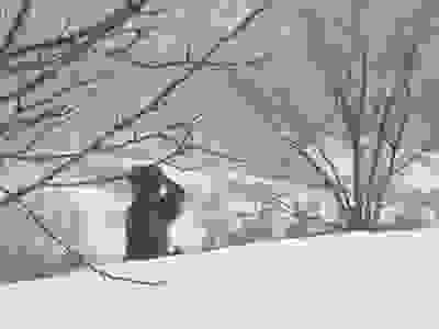 ファイル 2422-5.jpg