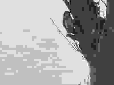 ファイル 2423-2.jpg