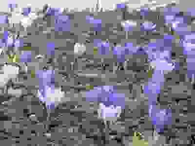 ファイル 2427-1.jpg