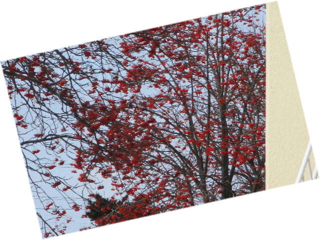 ファイル 2504-3.jpg