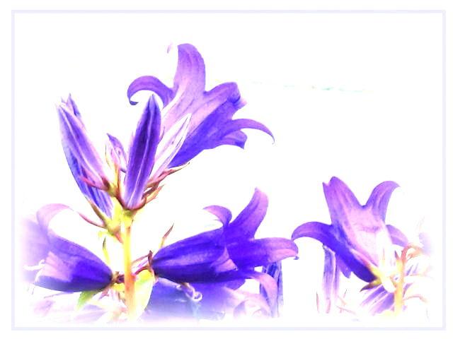 ファイル 2540-5.jpg