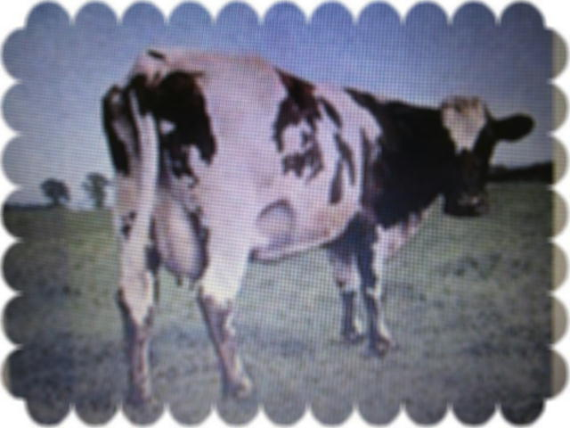 ファイル 2615-1.jpg