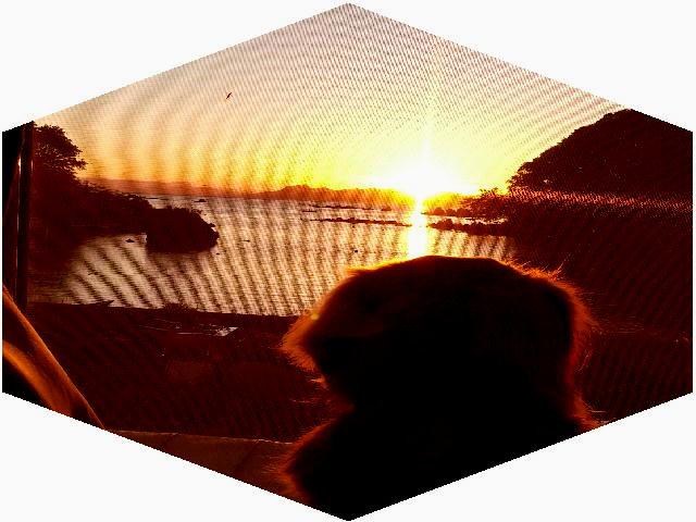 ファイル 2674-2.jpg