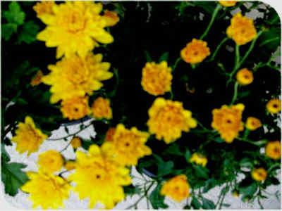 ファイル 699-3.jpg
